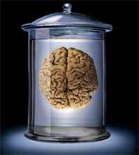 Кто сдает свои мозги в камеру хранения?