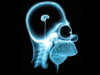 Смартфоны перекраивают мозг человека